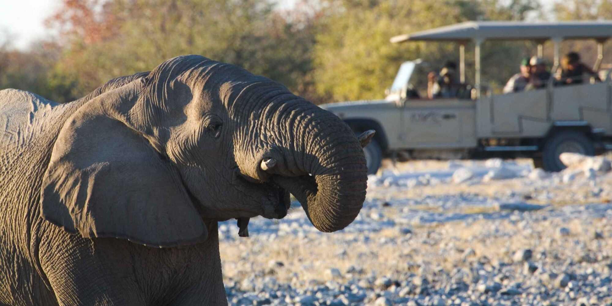 001 Etosha Wildlife