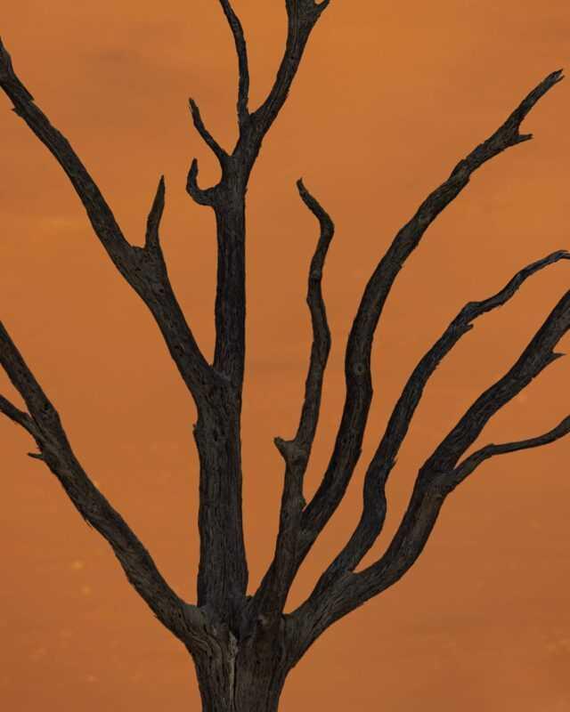 Les arbres graphiques du Deadvlei sont morts depuis environ 800 ans suite à l'apparition d'une dune qui à bouché l'arrivée d'eau de la rivière Tsauchab. Pleins pleins d'autres photos sont à venir ...